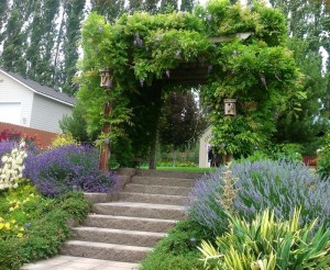 A hobbit house is being constructed for this wisteria arbor staircase