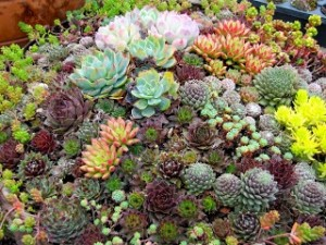 Garden sponsor Heritage Nursery is offering a seminar on succulents and sedums at its secret garden #2, Pastoral Paradise.  Seminars will be presented at noon and 1:30 p.m.
